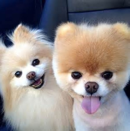 Largest And Smallest Dog Breeds