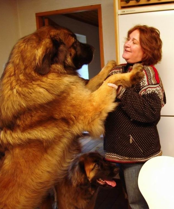 Largest Dog Breed In Russia