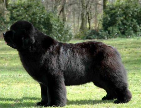 Largest Dog Breed Russian