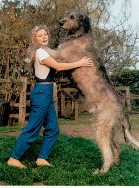 Largest Dog Breed Weight