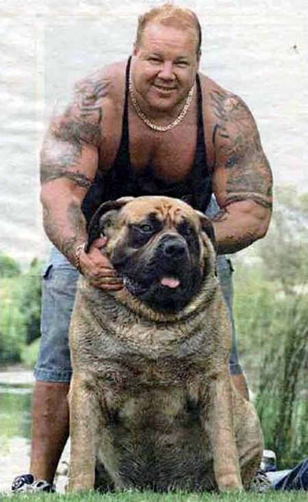 Largest Dog Breed