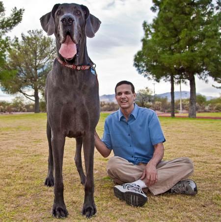 Largest Dog Breeds