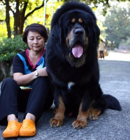 Largest Dog Breeds List