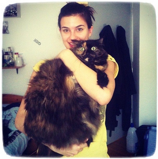 Largest Domestic Cat Breed Usa