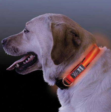 Lighted Dog Collars For Small Dogs