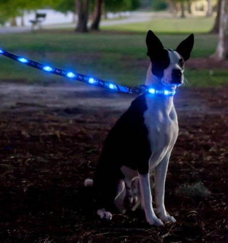 Lighted Dog Collars Petsmart