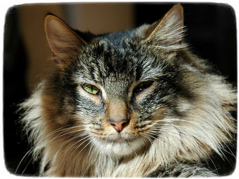 List Of Cat Breeds By Size