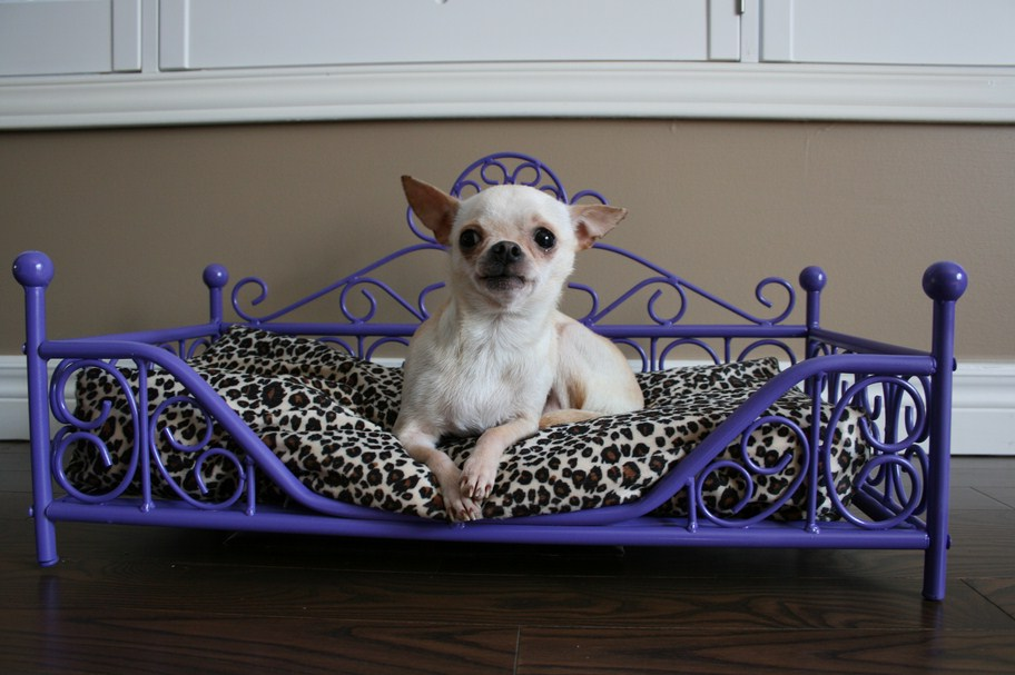 Luxury Dog Beds Canada