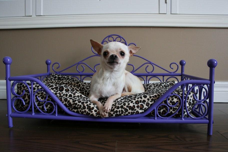 Luxury Dog Beds Canada
