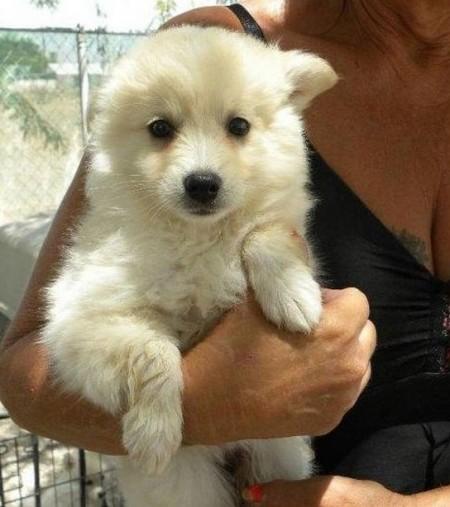 Medium Dog Breeds Australia