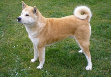 Medium Dog Breeds Pictures And Names
