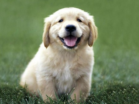 Medium Dog Breeds Short Hair