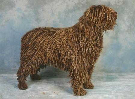 Medium Dog Breeds Uk