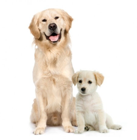 Medium Sized Dog Breeds Good With Kids