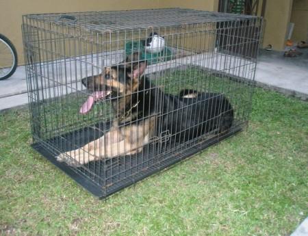 Midwest Dog Crates Uk