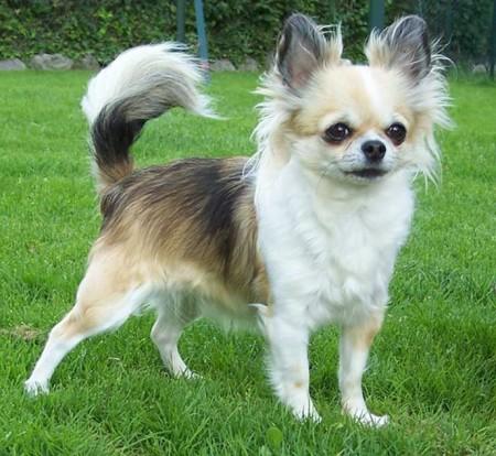 Mixed Dog Breeds List