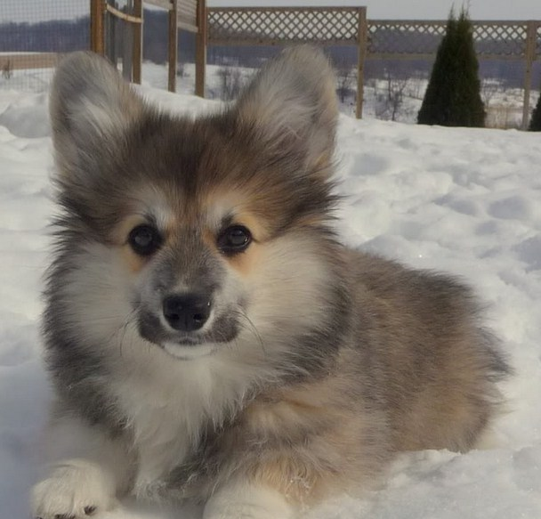 Mixed Dog Breeds List With Pictures