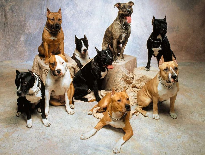 Mixed Dog Breeds Pictures