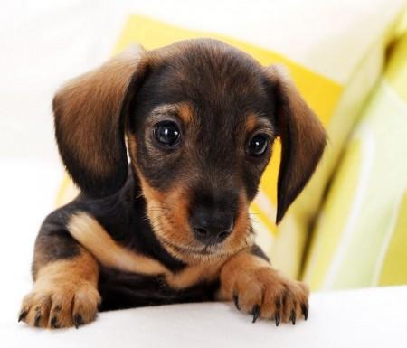Mixed Dog Breeds Small
