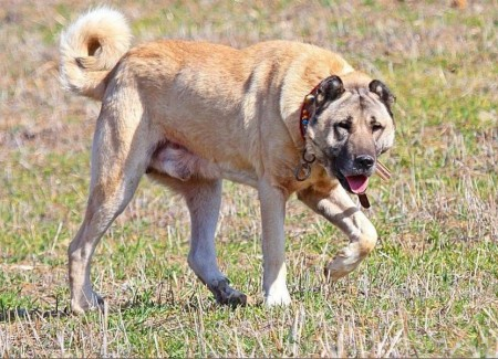 Most Aggressive Dog Breeds 2013