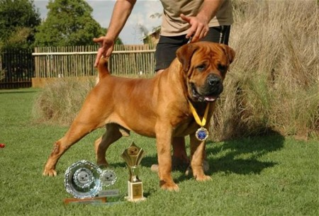 Most Expensive Dog Breeds In South Africa