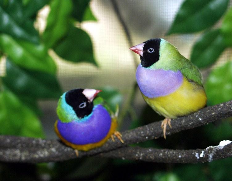 Names Of Birds In Urdu With Pictures