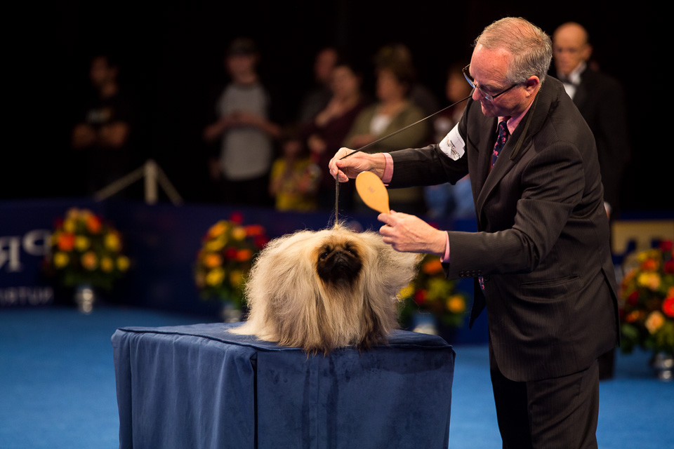 National Dog Show Pekingese