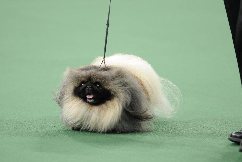 National dog show winner 2013