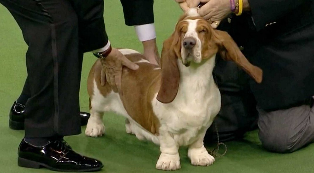 National Dog Show Winner