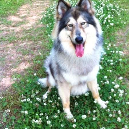 Native American Indian Dog Wiki