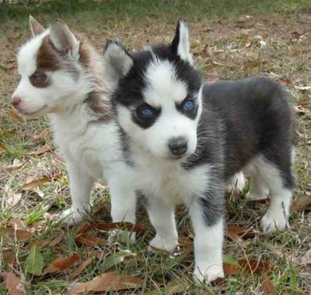 New Mixed Dog Breeds