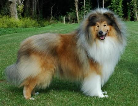 Non Shedding Dogs Large