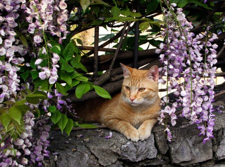 Orange Tabby Cat Images