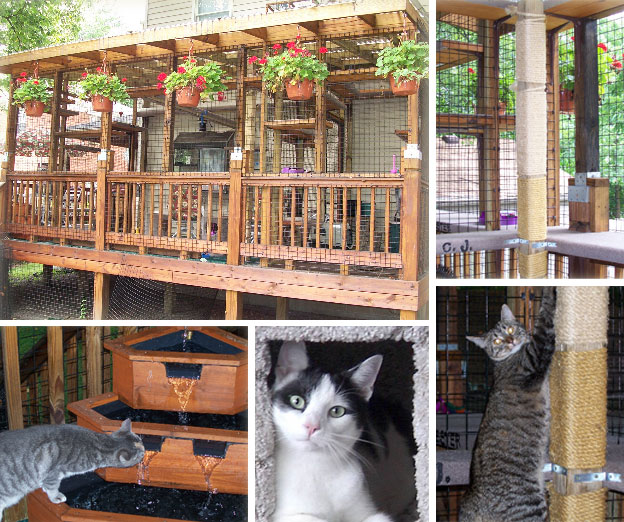 Outdoor Cat House Designs