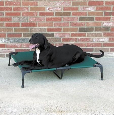 Outdoor Dog Bed Amazon