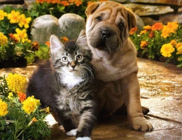 Photos Of Dogs And Cats Together