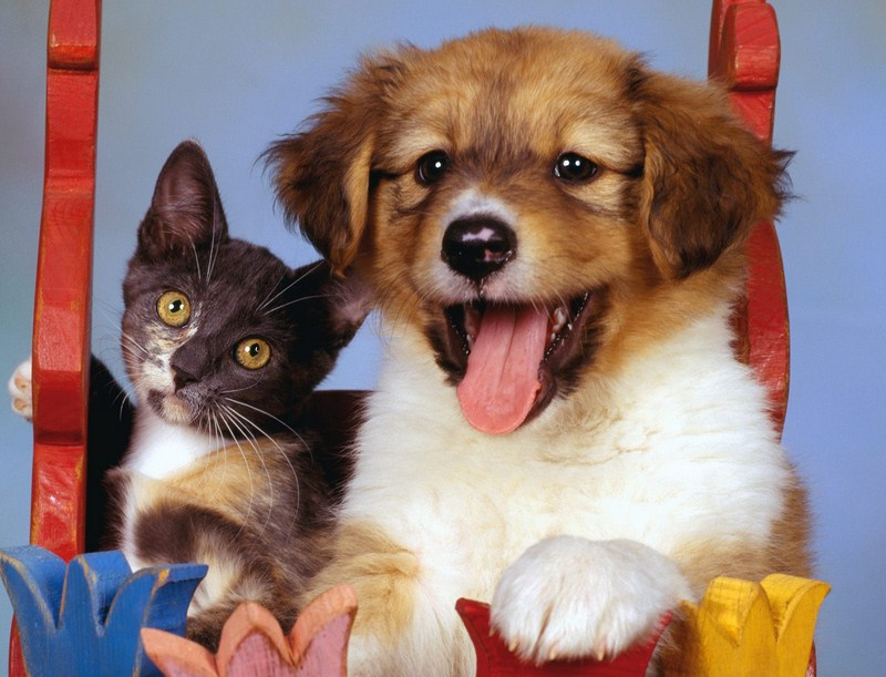 Photos Of Dogs And Cats