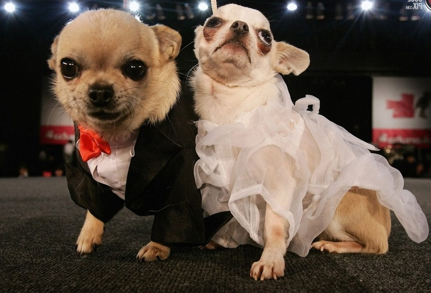 Photos Of Dogs Dressed Up