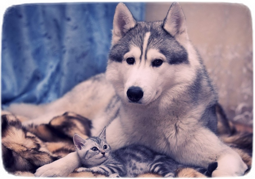 Pics Of Cats And Dogs