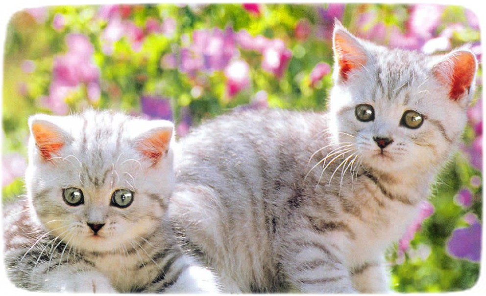 Pics Of Cats And Kittens