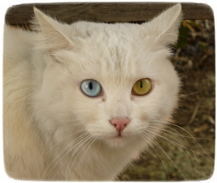 Pics Of Cats Eyes