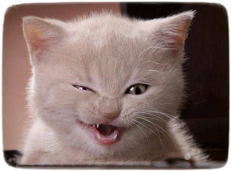 Pics Of Cats Funny