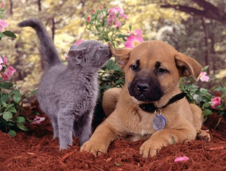 Pics Of Dogs And Cats