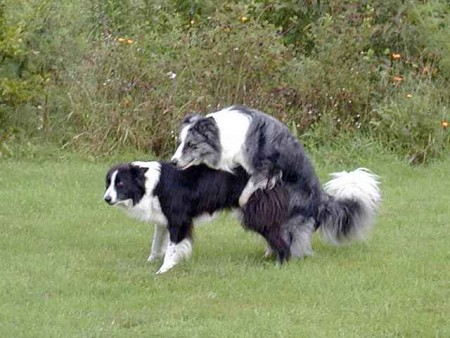 Pics Of Dogs Mating