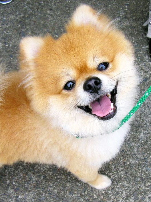 Pics Of Dogs Smiling