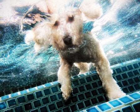 Pics Of Dogs Underwater