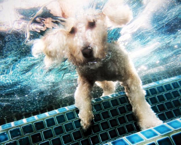 Pics Of Dogs Underwater