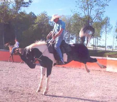 Pics Of Horses Bucking