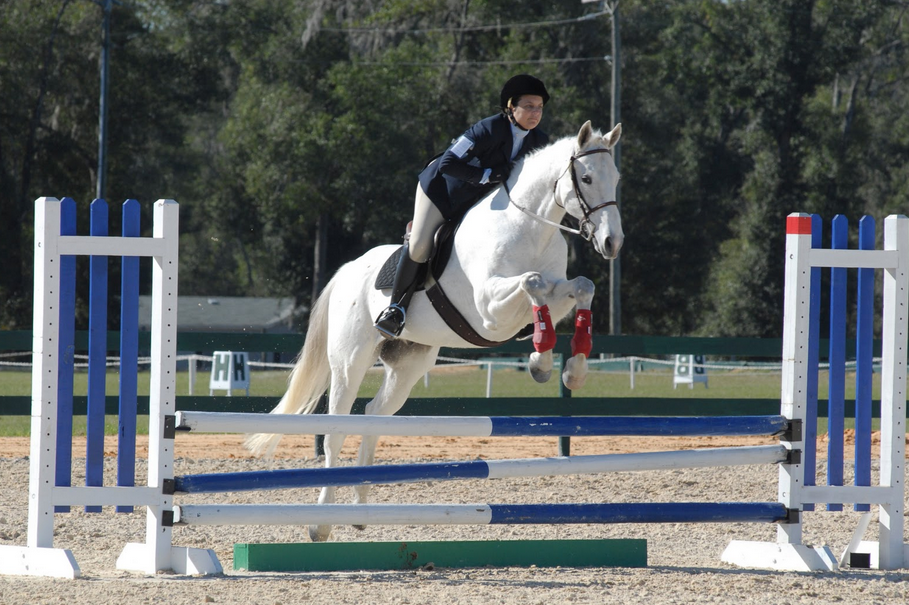 Pics Of Horses Jumping