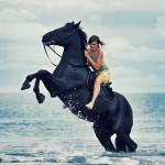 Pics Of Horses Rearing